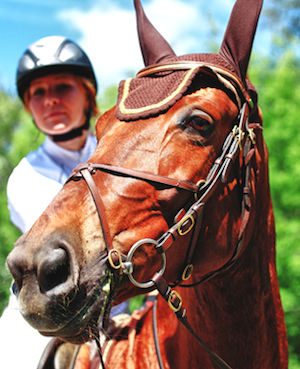 liability insurance for horse owners